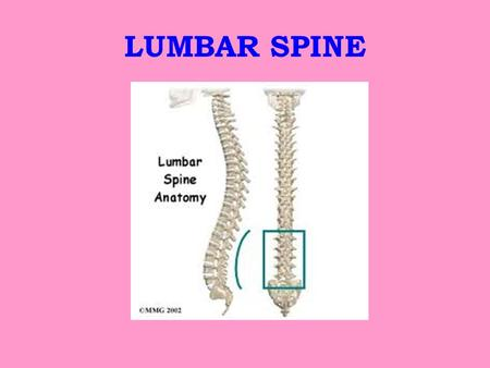 LUMBAR SPINE. Bony Anatomy Made of two parts - vertebral body and vertebral arch Pedicles – attach body to arch.