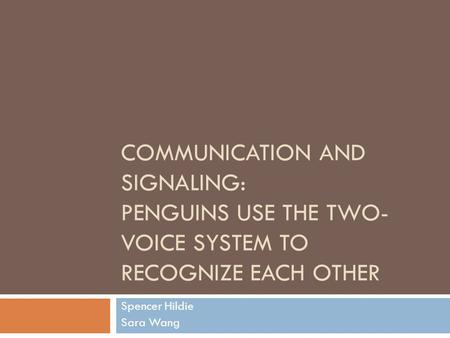 COMMUNICATION AND SIGNALING: PENGUINS USE THE TWO- VOICE SYSTEM TO RECOGNIZE EACH OTHER Spencer Hildie Sara Wang.