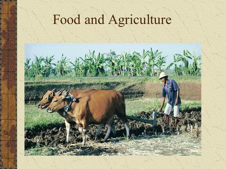 Food and Agriculture. MAJOR FOOD SOURCES Three crops deliver majority of world's nutrients: Corn, Wheat, & Rice = 60% of human caloric intake Potatoes,