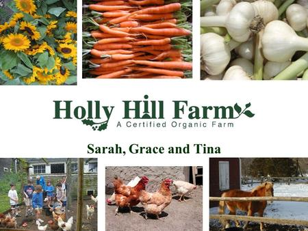 Sarah, Grace and Tina. History of Holly Hill Farm The land has been farmed since the early 17th century, when the farm's salt marsh was a source of grazing.