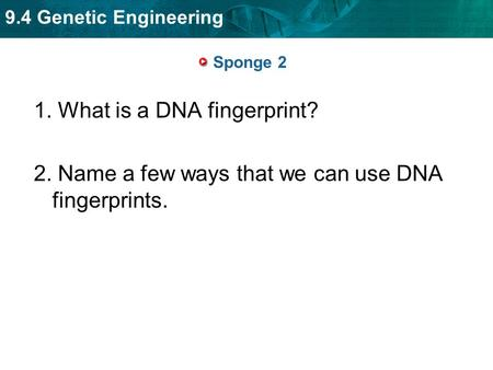 9.4 Genetic Engineering Sponge 2 1. What is a DNA fingerprint? 2. Name a few ways that we can use DNA fingerprints.