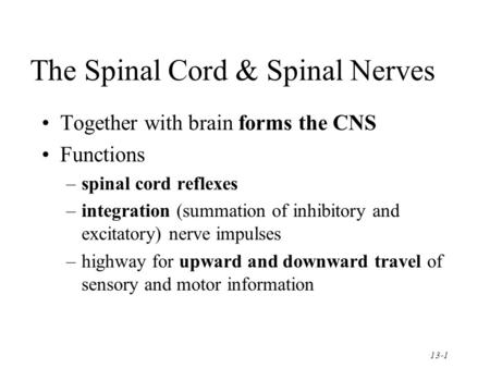 13-1 The Spinal Cord & Spinal Nerves Together with brain forms the CNS Functions –spinal cord reflexes –integration (summation of inhibitory and excitatory)