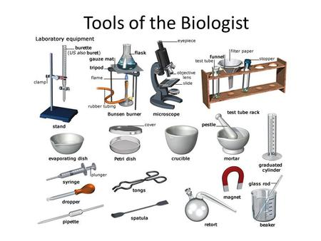 Tools of the Biologist. In order to observe, discover, and explore, scientists use many different pieces of lab equipment. A.Measuring Length 1. Meter.