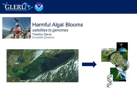 Harmful Algal Blooms satellites to genomes Timothy Davis Ecosystem Dynamics Place Photo Here.