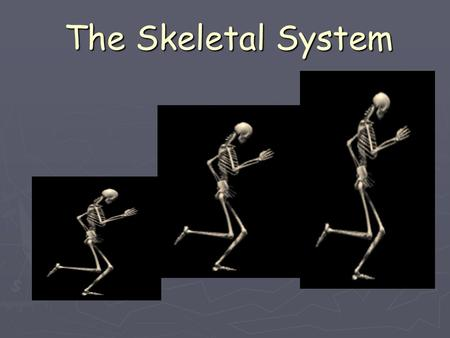The Skeletal System. 5 Functions of the Skeletal System 1. Shape and Support: The backbone is the main support center for the upper body. It holds your.