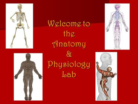 Welcome to the Anatomy & Physiology Lab. What do you call the medical student who graduates at the bottom of his/her class? Doctor.