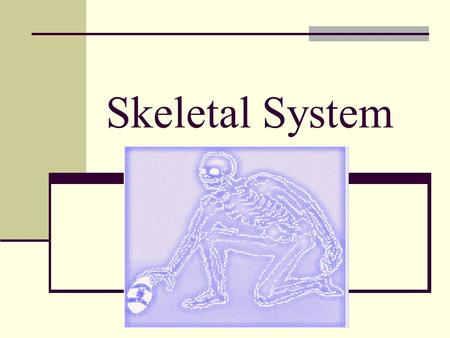 Skeletal System. Fill in the skeletal body on the back page of your packet. Use pages 134 in your text book.