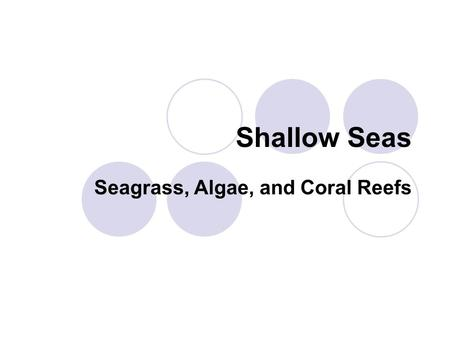 Shallow Seas Seagrass, Algae, and Coral Reefs. Seagrass vs. Algae Seagrasses  Found in the plant kingdom  Have actual roots below the mud, transport.