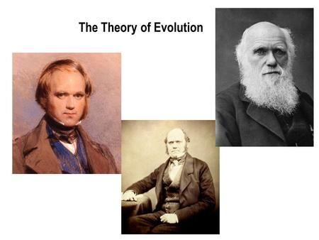 The Theory of Evolution What is Evolution? Evolution is a process by which modern organisms have descended from ancient organisms. It is a change in.