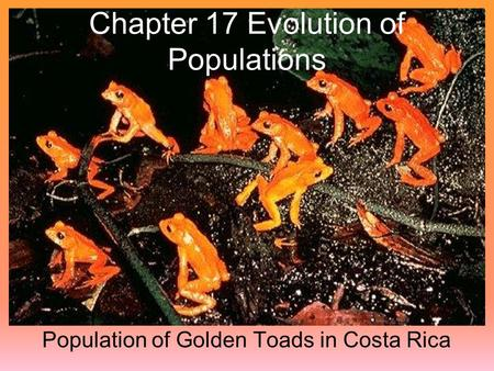 Chapter 17 Evolution of Populations Population of Golden Toads in Costa Rica.