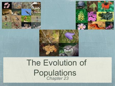 Chapter 23 The Evolution of Populations. Natural selection acts on individuals But remember individuals do not evolve Yet populations do evolve (over.