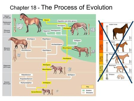 Chapter 18 - The Process of Evolution. 18.1 MICROEVOLUTION Population -- all the members of a single species Population genetics – studies variations.