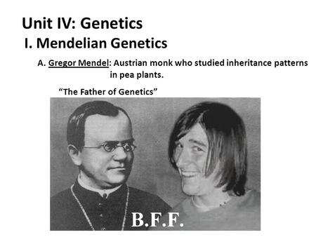 "I. Mendelian Genetics Unit IV: Genetics A. Gregor Mendel: Austrian monk who studied inheritance patterns in pea plants. ""The Father of Genetics"""