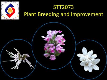 STT2073 Plant Breeding and Improvement. Quality vs Quantity Quality: Appearance of fruit/plant/seed – size, colour – flavour, taste, texture – shelflife.