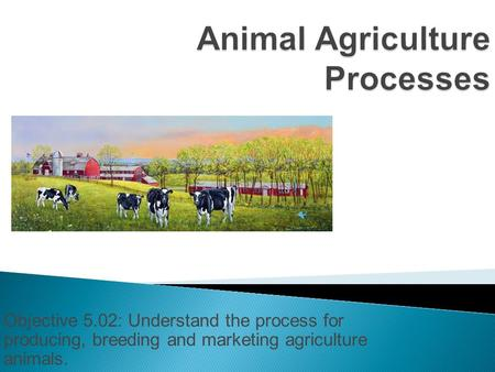 Objective 5.02: Understand the process for producing, breeding and marketing agriculture animals.