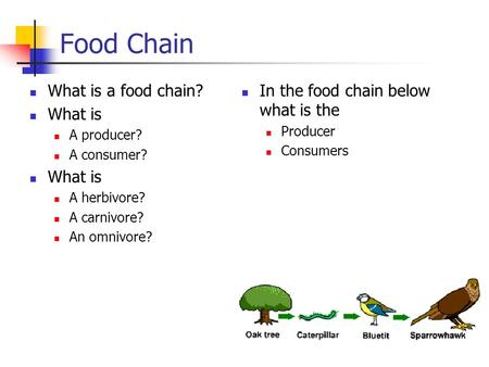 Food Chain What is a food chain? What is A producer? A consumer? What is A herbivore? A carnivore? An omnivore? In the food chain below what is the Producer.