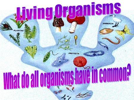 Organisms The six characteristics common to living organisms:  Living things are made of cells.  Living things obtain and use energy.  Living things.