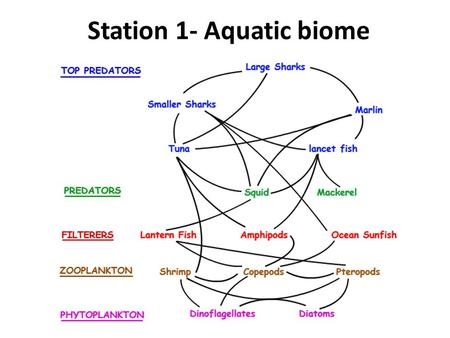 Station 1- Aquatic biome. 1. Define food chain. 2. Define food web. 3. The arrows in food chains/webs show flow of what? 4. If the top predators are removed,