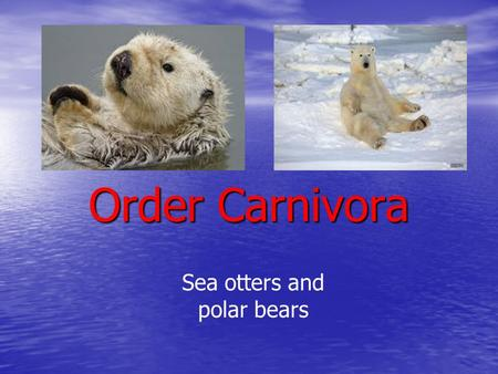 Order Carnivora Sea otters and polar bears. Sea Otters Kingdom – Animalia Phylum – Chordata Class - Mammalia Order - Carnivora Family - Mustelidae.
