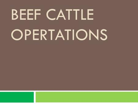 BEEF CATTLE OPERTATIONS. Objectives  Students should be able to :  Plan a feeding program for a cow calf herd  List and describe approved practices.