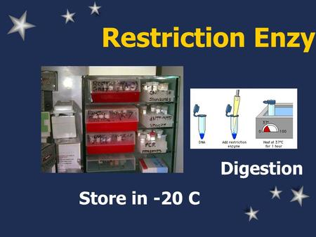 Restriction Enzyme Store in -20 C Digestion. Restriction Enzyme Buffer NaCl or KCl, TrisHCl, MgCl 2, DTT Different salt: varied activity Buffer supplied.