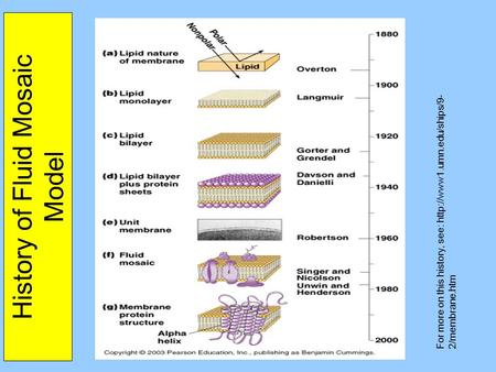 History of Fluid Mosaic Model For more on this history, see:  2/membrane.htm.