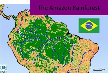 The Amazon Rainforest. Objectives Use a mind map technique to identify and give detail about developments in the Amazon Rainforest Page.