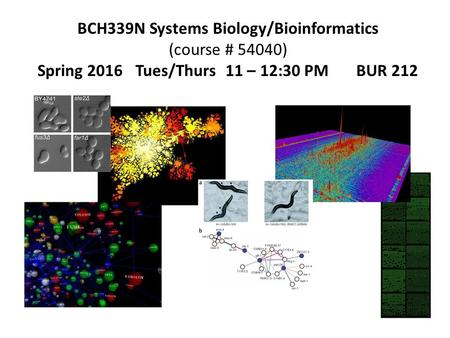 BCH339N Systems Biology/Bioinformatics (course # 54040) Spring 2016 Tues/Thurs 11 – 12:30 PM BUR 212.