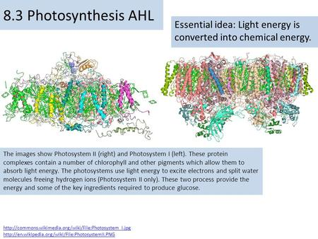 Essential idea: Light energy is converted into chemical energy. 8.3 Photosynthesis AHL The images show Photosystem II (right) and Photosystem I (left).
