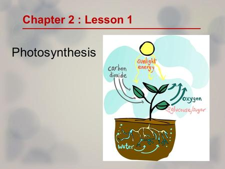 Photosynthesis Chapter 2 : Lesson 1. How Do Living Things Get Energy From the Sun? Read pg. 45 and talk about Figure 1 PHOTOSYNTHESIS.