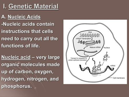 I. Genetic Material A. Nucleic Acids -Nucleic acids contain instructions that cells need to carry out all the functions of life. Nucleic acid – very large.
