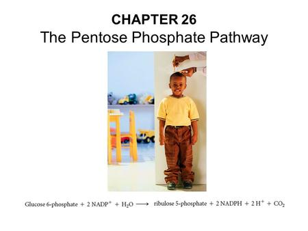 CHAPTER 26 The Pentose Phosphate Pathway. Pentose Phosphate pathway is active when there is excess glucose 6-phosphate.