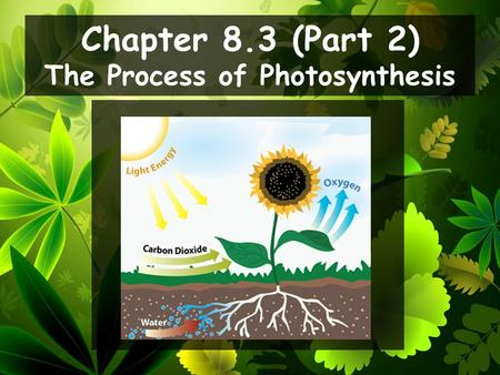 Chapter 8.3 (Part 2) The Process of Photosynthesis.