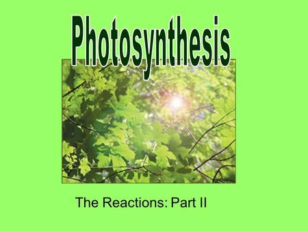 The Reactions: Part II. Summary: 1.Light Dependent Reactions  Stage 1: Capturing light energy  Stage 2: Synthesizing ATP and NADPH 2. Light Independent.