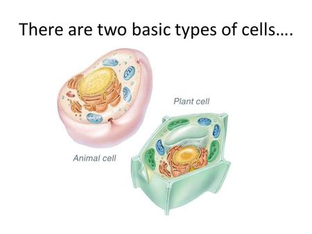examination of basic animal and plant tissues Overview of fourth grade organisms week 1  compare plant and animal cells life cycle - organisms (4a)  but emphasize to students the basic.