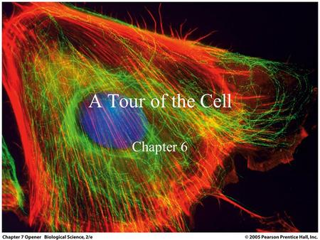 A Tour of the Cell Chapter 6. Objectives Be familiar with the regions of the cell and the overall role of each region Be familiar with the basic organelles.