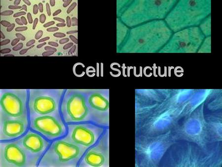 Cell Structure. Microscopes Reveal Cell Structure 1. Most cells are too small to see with the naked eye 2. Scientists became aware of cells only after.