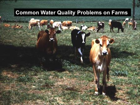 Common Water Quality Problems on Farms. Water Importance Dairy cows need 4 to 4.5 lbs. per lb. of milk produced A single cow may consume over 300 lbs.