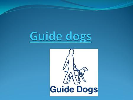 What do you know about guide dogs Guide dogs Guide dog puppies.