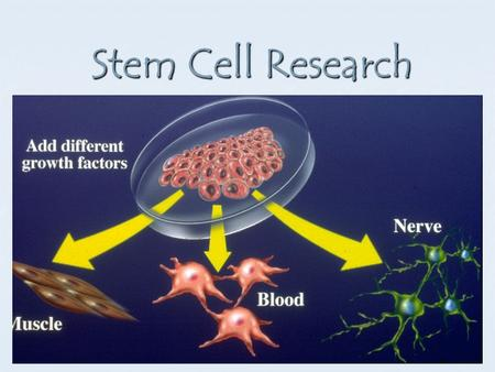 Stem Cell Research. Types of Stem Cells Embryonic Stem Cells – from embryos (fertilized egg cell) Embryonic Stem Cells – from embryos (fertilized egg.