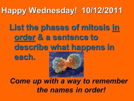 Happy Wednesday! 10/12/2011 List the phases of mitosis in order & a sentence to describe what happens in each. Come up with a way to remember the names.