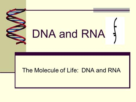 DNA and RNA The Molecule of Life: DNA and RNA. DNA vs. RNA Summary DNARNA By comparison they both have: Sugar phosphate background Nitrogenous bases By.