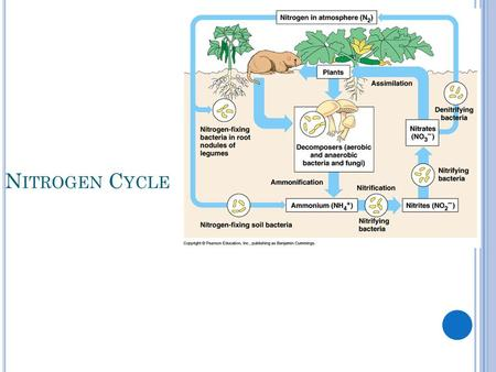 N ITROGEN C YCLE. N ITROGEN IS IN THE AIR. H OW DOES IT GET TO OTHER PLACES ? Lightning can fix nitrogen into the soil Bacteria can fix nitrogen into.