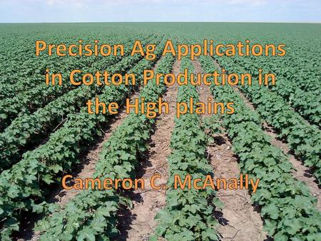History of Cotton in The High Plains Cotton has been in production since the early 1900s, but has recently increased in the area because cotton is more.