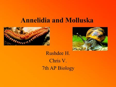 Annelidia and Molluska Rushdee H. Chris V. 7th AP Biology.