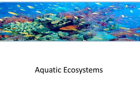 Aquatic Ecosystems. Marine Ecosystem The Ocean can be divided into zones Intertidal zone – strip of land between high and low tide lines (changes in moisture,