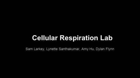 Cellular Respiration Lab Sam Larkey, Lynette Santhakumar, Amy Hu, Dylan Flynn.