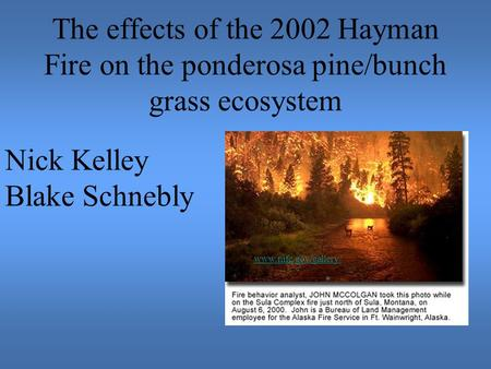 The effects of the 2002 Hayman Fire on the ponderosa pine/bunch grass ecosystem Nick Kelley Blake Schnebly www.nifc.gov/gallery/