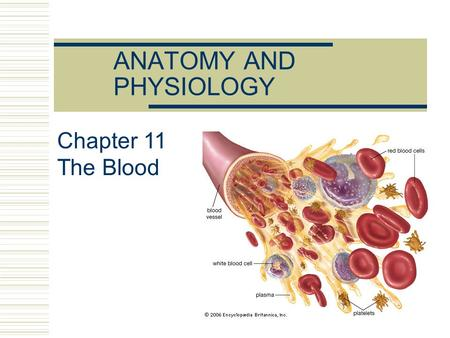 ANATOMY AND PHYSIOLOGY Chapter 11 The Blood. Blood is the only fluid tissue The Blood.