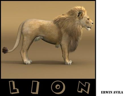 ERWIN AVILA. BASIC INFORMATION The lion is a member of the family felidae and one of the four big cats in the genus panther. Lion's adaptations is their.